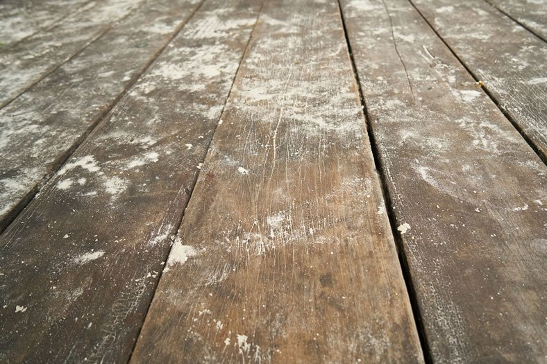 How To Get Rid Of Mold Under The Floor