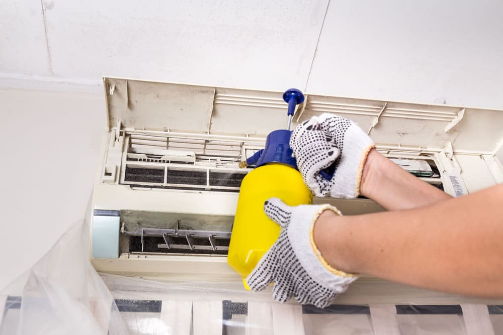 mold mites removal