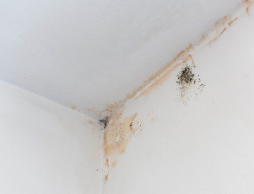 Does Mold Die When It Dries Out?